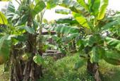 Bán đất vườn xã Long Phước, Tp. Bà Rịa.
